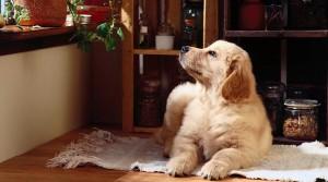 Практичные решения для квартир, где есть домашние животные